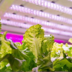 Horticultural Grow LED Lighting